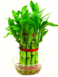 Two layer Bamboo Plant